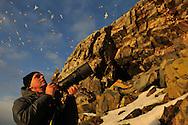 Jan Pedersen photographing Kittiwakes, Rissa tridactyla, Hornøya Island, Varanger Peninsula, Norway, Scandinavia