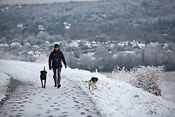 © Licensed to London News Pictures. 17/01/2016. Dorking, UK. A woman walks her dogs in the Surrey Hills near Box Hill. Snow has fallen in the South East for the first time this winter. Photo credit: Peter Macdiarmid/LNP