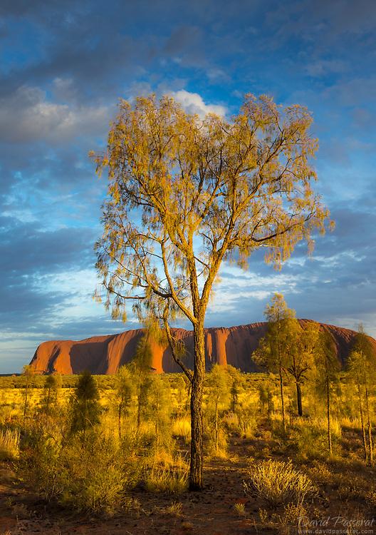 Sacred nature in Uluru