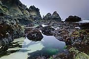Tide Pools along Northern California's craggy Sonoma Coast, Pacific Ocean.
