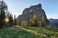 Wildflower meadows at sunset. Boulder Pass, Glacier National Park Montana