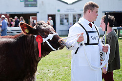 © Licensed to London News Pictures.16/07/15<br /> Harrogate, UK. <br /> <br /> A young farmer leads his bull around the show arena during judging on the final day of the Great Yorkshire Show.  <br /> <br /> England's premier agricultural show has seen three days of showcasing the best in British farming and celebrating the countryside.<br /> <br /> The event which attracts over 130,000 visitors each year displays the cream of the country's livestock and offers numerous displays and events giving the chance for visitors to see many different countryside activities.<br /> <br /> Photo credit : Ian Forsyth/LNP