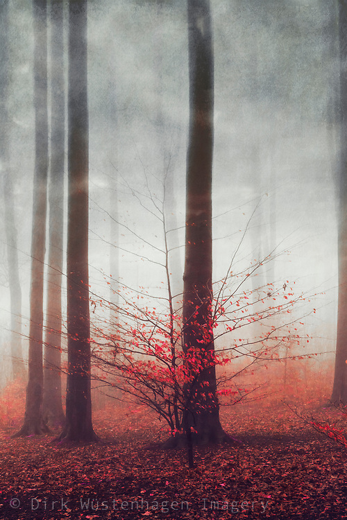 abstract forest scene in winter and fog