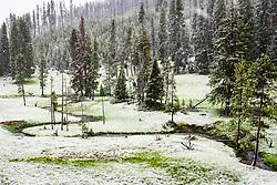 Summer snow, Yellowstone National Park
