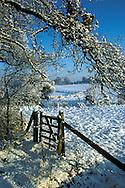Farmland in Winter