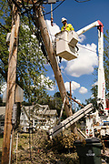 18 AUGUST 2020 - CEDAR RAPIDS, IOWA: An IBEW electrical worker takes apart a destroyed power pole in Cedar Rapids. Cedar Rapids was the state's hardest hit city by the derecho that roared across Iowa last week. City officials said the damage left by the derecho was more extensive than the 2008 flood that destroyed much of its downtown. City residents are reporting that almost every home was damaged in the storm, many businesses were closed, and up to half of the city's tree canopy was destroyed. A week after the storm, more than 40,000 homes were still without power. A spokesman for Alliant Energy said the utility has replaced as many power poles in one week that they normally replace in 8 months. On Monday, President Trump approved a $4 billion emergency declaration for Iowa to aid in derecho recovery.     PHOTO BY JACK KURTZ