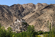 Chemrey monastery in Ladakh, surrounded by buckthorn bushes.