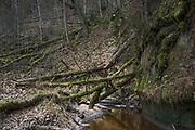 River Vildoga and sandstone cliffs along it, Gauja National Park (Gaujas Nacionālais parks), Latvia Ⓒ Davis Ulands | davisulands.com