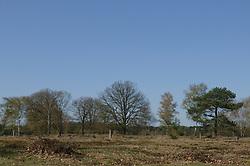 De Stulp, Lage Vuursche, Baarn, Utrecht, Netherlands