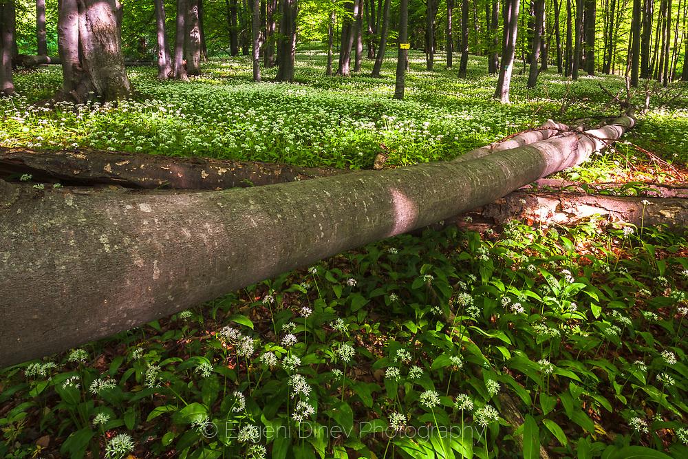 Steneto Forest Reserve
