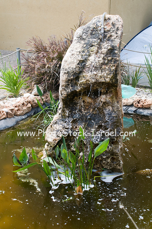 Garden pond with water plants