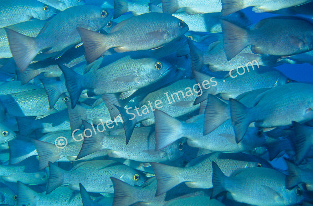 The Cocos Islands are located about 300 miles off the coast of Costa Rica, and measure less than 10 square miles. <br /> <br /> Its territory includes the southernmost point of North American. <br /> <br /> Though the trip is long, dive trips are popular as there is abundant pelagic animals and interesting reef activity.