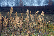 close up of wild grasses in late fall season