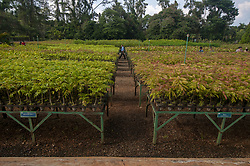 March 27, 2019 - Soroako, South Sulawesi, Indonesia - Soroako, South Sulawesi, Indonesia (March 27): Visitors are in a tree nursery in the nickel mining area of ??PT. Vale in Soroako, East Luwu, South Sulawesi, Indonesia, Wednesday, March 27, 2019. The second largest mining company in the world is developing nursery areas to reforest ex-mining as a form of responsibility for the preservation of the environment after exploitation. (Credit Image: © Basri Marzuki/NurPhoto via ZUMA Press)
