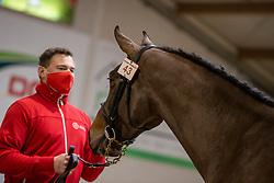 043, Stybar van't Verahof<br /> BWP Hengstenkeuring 2021<br /> © Hippo Foto - Dirk Caremans<br />  11/01/2021