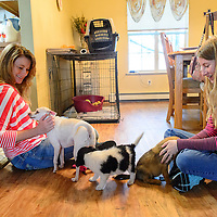 070915  Adron Gardner/Independent<br /> <br /> Kris Gruda, left, pets Lala a former foster dog from the humane society, as daughter Paige plays with two foster puppies at their home in Gallup Thursday.   Lala is now a permanent resident with the Gruda family.