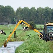 Nederland Delft 17-09-2010 20100917     A4 Delft - Schiedam wordt definitief verlengd,  er  is begin deze maand officieel besloten tot de aanleg van het stuk snelweg waarover zo'n vijftig jaar is gesproken. Natuurgebied dat in de toekomst zal moeten wijken na het doortrekken van de A4, een boer maakt watergang schoon. Rijkswaterstaat en het ministerie van VWS hebben dat laten weten.Over de nieuwe verkeersader wordt al decennialang gesteggeld, vooral omdat de weg het natuurgebied Midden-Delfland doorboort...De zeven kilometer asfalt tussen Delft en Schiedam doorkruist straks verdiept of via een tunnel het natuurgebied tussen de twee steden. Het belangrijkste pluspunt is dat de A13 wordt ontlast. Op rijksweg A13 staat dagelijks de voor de economie schadelijkste file van Nederland. Met het project A4 Delft-Schiedam willen lokale en regionale overheden en het Rijk de problemen rond bereikbaarheid en leefbaarheid op en rond de A13 en de A4 Delft-Schiedam oplossen. Midden Delftland. , Waterbeheerplan, watergang, waterhuishouding, watermanagement, watersysteem, wegennet, wegnet, wei, weide, weidegang, weiland, wijds, wijdsheid