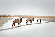 """Arab and Afzal, two young sons of the deceased Khan, are leaving the Qyzyl Qorum camp with Bactrian camels to load up on """"Wuch"""", the winter fodder for the animals. They fetch it at the autumn camp, an hour walk away...Trekking through the high altitude plateau of the Little Pamir mountains, where the Afghan Kyrgyz community live all year, on the borders of China, Tajikistan and Pakistan."""