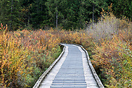 Boardwalk through the autumn foliage along the Rolley Lake Trail at Rolley Lake Provincial Park in Mission, British Columbia, Canada.