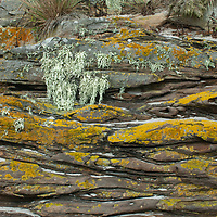 Liches and tussock grass adorn sedimentary rock on Carcass Island in Britain's Falkland Islands.