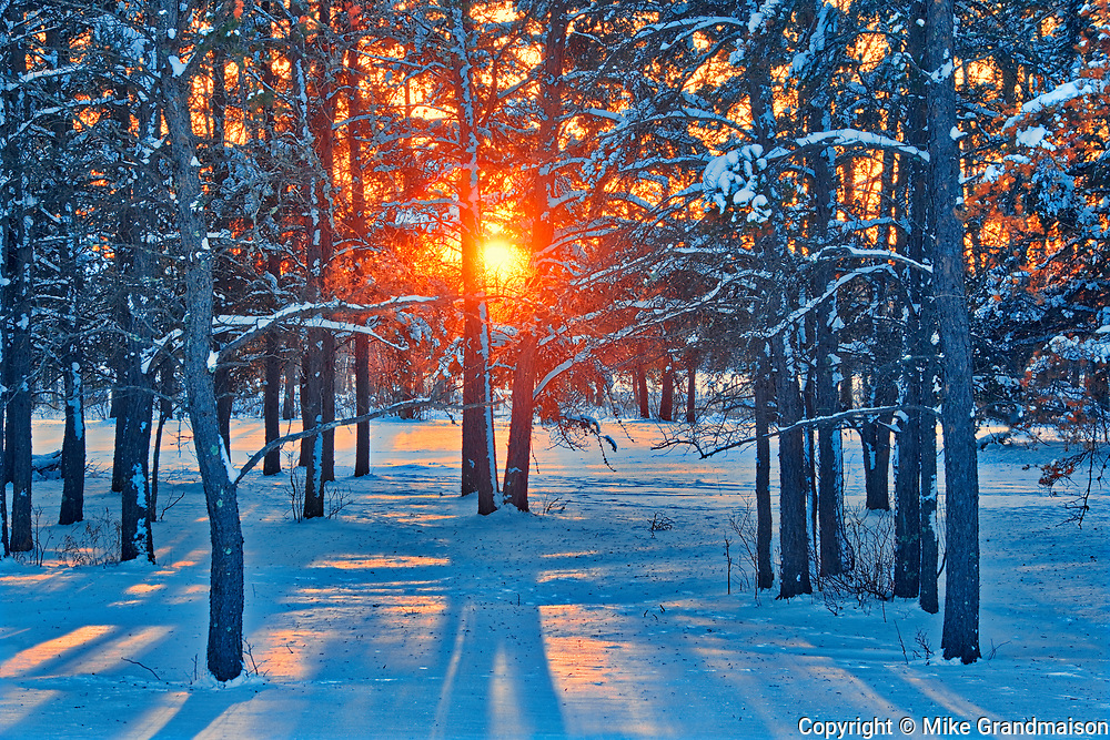 Sunset on coniferous forest, Sandilands Provincial Forest, Manitoba, Canada