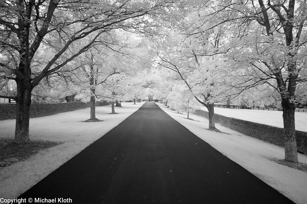 Ashford Stud farm road surrounded by trees and stone fences near Versailles, KY.  Infrared (IR) photograph by fine art photographer Michael Kloth. Black and white infrared photographs