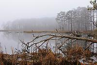 Blackwater National Wildlife Refuge, Cambridge, Maryland, USA