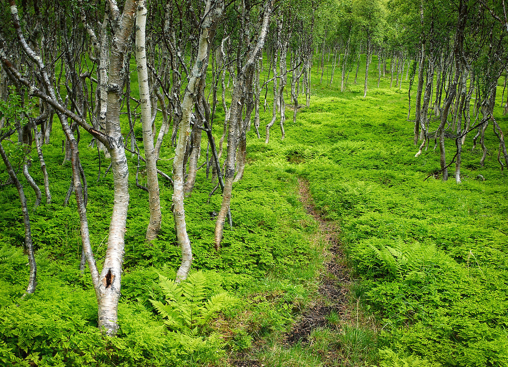 Norway - Forest path