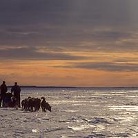 Dog teams mush across frozen Great Slave Lake, NWT, Canada.