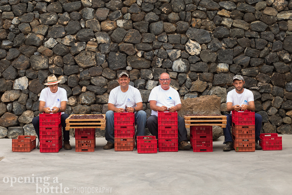 Workers destem Zibbibo grapes for the creation of Passito di Pantelleria at Donnafugata, an esteemed winery based in Marsala, Sicily, Italy.
