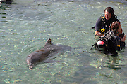 Israel, Eilat, Dolphin Reef Beach, Common Bottlenose Dolphin (Tursiops truncatus) Swimming with the dolphins