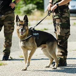 Entraînement des équipes cynophiles de la Gendarmerie Nationale. Chiens de recherche de produits stupéfiants, chiens de recherche de billets, et chiens d'attaque.<br /> Mai 2015 / FRANCE<br /> Voir le reportage complet (58 photos)<br /> http://sandrachenugodefroy.photoshelter.com/gallery/2015-05-Entrainement-des-equipes-cynophiles-Gendarmerie-Complet/G0000WFwrMifeiQE/C0000yuz5WpdBLSQ