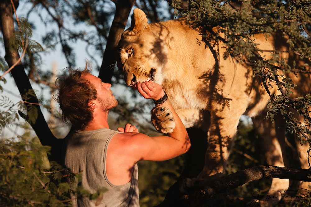 Valentin Gruener with a lioness he hand raised from a small dying cub to a healthy adult, Grasslands Private Reserve, Kalahari Desert, Botswana, Africa,