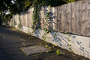 Ivy grown through cracks and gaps of a fence that borders a property on Deepdene Road, a residential street in Lambeth, SE5 in south London, on 22nd September 2021, in London, England.