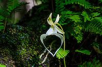 Orchids Florida realflorida johnbob johnbobcarlos swamps airboat florida trails ghostorchids bigcypress everygladesgallery