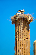 The Hellanistic Ionic columns of the Apollo Smintheion Sanctuary with Storks nesting ontop, near Gulpinar Village Turkey. The Temple of Apollo is dedicated rather bizarrely to Apollo as a Slayer of Mice. .<br /> <br /> Visit our TURKEY PHOTO COLLECTIONS for more photos to download or buy as wall art prints https://funkystock.photoshelter.com/gallery-collection/3f-Pictures-of-Turkey-Turkey-Photos-Images-Fotos/C0000U.hJWkZxAbg