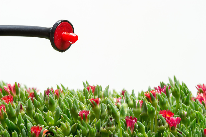 Drip emitters are an effective way to water your plants and trees. Photo illustration taken February 20, 2014.   John Chacon / California Department of Water Resources