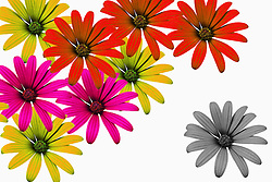 Illustration of flowers representing good and bad in world