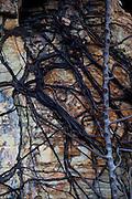 Sao Goncalo do Rio Preto_MG, Brasil...Parque Estadual do Rio Preto, em Sao Goncalo do Rio Preto, Minas Gerais. Na foto detalhe de uma planta  na rocha...The Rio Preto State Park, in Sao Goncalo do Rio Preto, Minas Gerais. In this photo the plant on the rock...Foto: LEO DRUMOND / NITRO