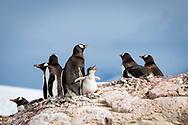 Cuverville, Antarctica