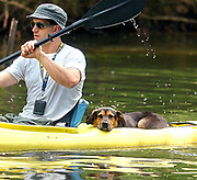 Liv6/6/05 Kirt Mayland 3<br /> ML0195A<br /> Kirt Mayand of Trout Unlimited takes a quick kayak tour of the Quinnipiac River with his dog Arlo. Photo by Mara Lavitt