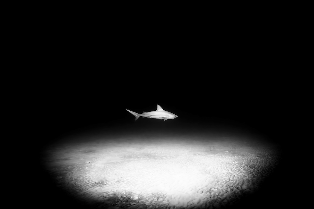 México, Quintana Roo, Playa del Carmen. Portrait of a bull shark swimming some 60 ft near a sandy bottom.
