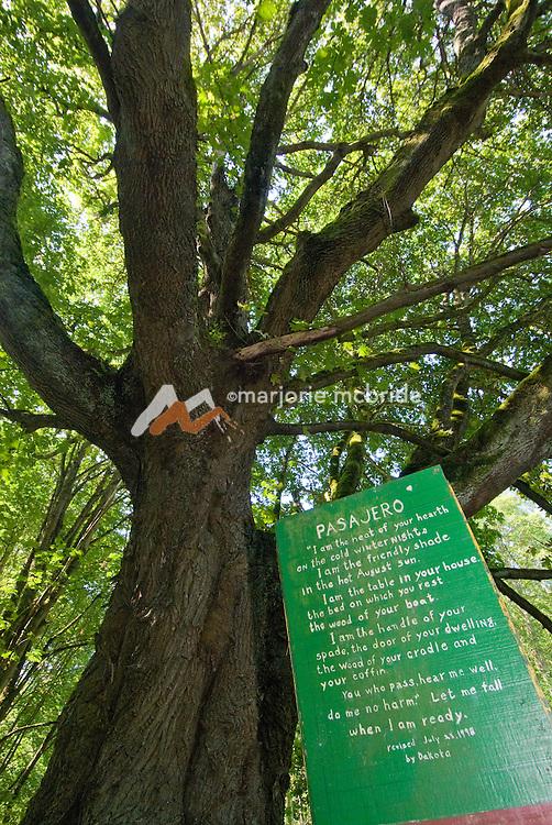 """Let me fall when I am ready"" tree sign, Lummi Island, San Juan Islands, USA."