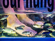"""03 JUNE 2016 - SIEM REAP, CAMBODIA: FIsh nibble on tourists' feet during a """"Fish Massage"""" at a street side massage parlor near Pub Street in Siem Reap, Cambodia. Pub Street is the center of Siem Reap's dining and nightlife.     PHOTO BY JACK KURTZ"""