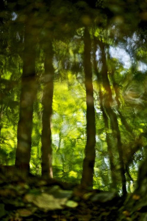 Killington Vermont USA  Lenshoot for 85mm 1.8 lens by Steve Simon