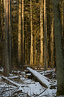 Puszcza Bialowieska, 22.02.2018. N/z sciete drzewa przy drodze z Hajnowki do Bialowiezy fot Michal Kosc / AGENCJA WSCHOD
