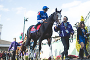 Longines Breeders' Cup Turf (Race 10) (Turf) <br /> November 3, 2018: Talismanic and jockey Mickael Barzalona heads to the paddock on Breeders' Cup World Championship Saturday at Churchill Downs on November 3, 2018 in Louisville, Kentucky.