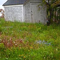 North America, Canada, Nova Scotia, Guysborough. A shed in a field of spring wildflowers.
