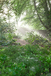 Misty early morning in the woodland garden at Glebe Cottage