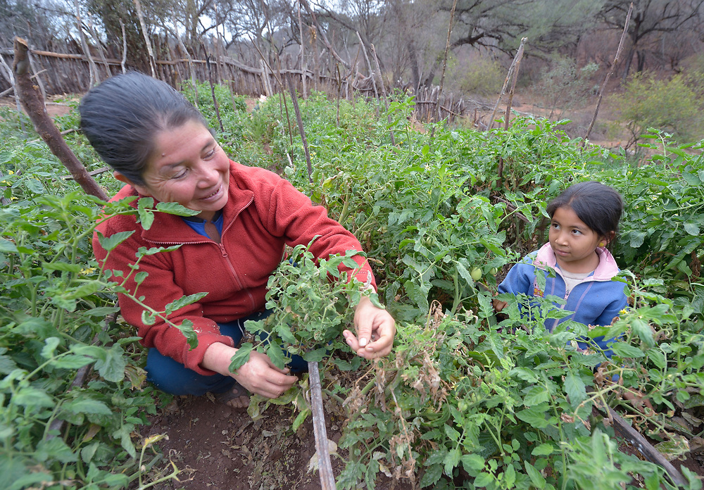 Rosa Antesano and her daughter Mariaa Griselda work in their garden in the Guarani indigenous village of Choroquepiao, in the Chaco region of Bolivia. They and their neighbors started the gardens with assistance from Church World Service, supplementing their corn-based diet with nutritious vegetables and fruits.